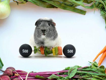 Na talerzu i na macie - warsztaty zdrowego odżywiania i ruchu
